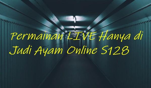 Permainan LIVE Hanya di Judi Ayam Online S128